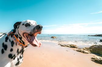 Top 5 dog beaches in Croatia