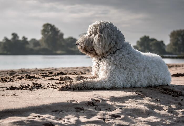 Top 5 dog beaches in Croatia! Check out our doggy list and advices!