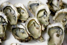 Dubrovnik: Taste the Most Delicious Oysters
