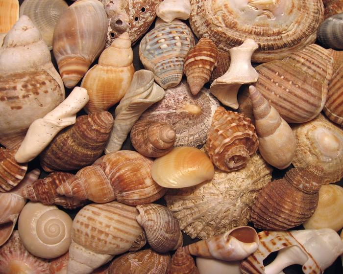La valorada colección de conchas de Makarska