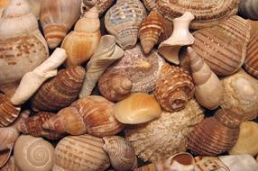 Makarska Valuable Collection of Shells