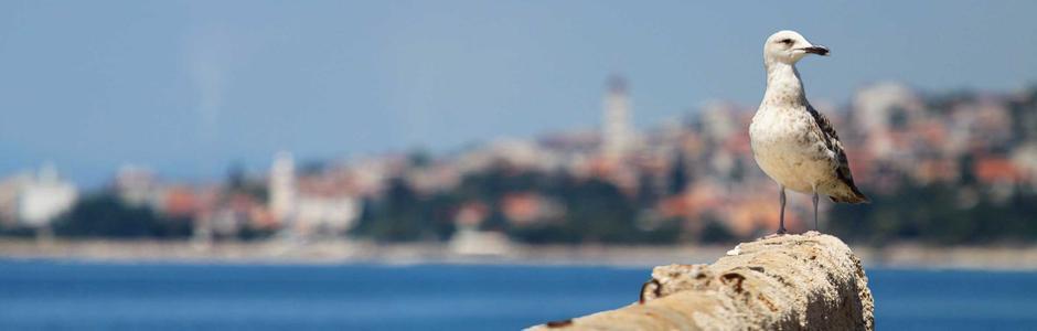 Riviera Crikvenica Chorvatsko