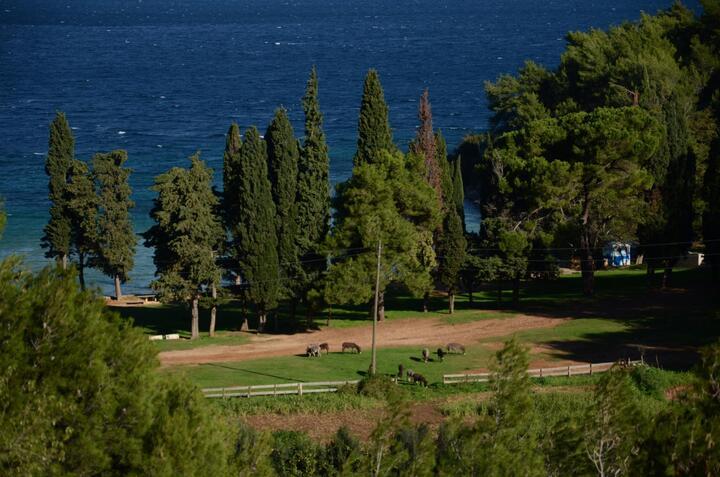 Vela Lozna on the island Brač (Srednja Dalmacija)