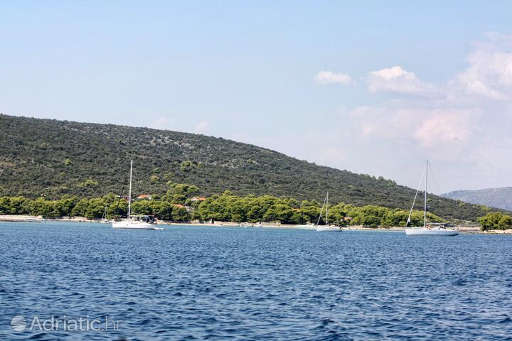 Krknjaši na otoku Drvenik (Srednja Dalmacija)