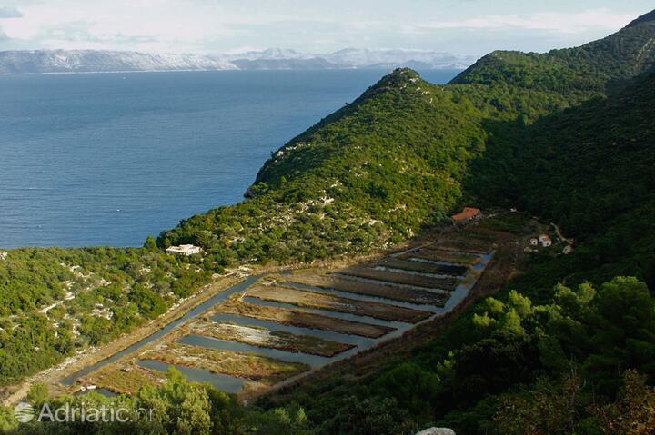 Kozarica Mljet szigeten (Južna Dalmacija)