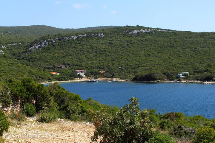 Kobiljak na otoku Pašman (Sjeverna Dalmacija)