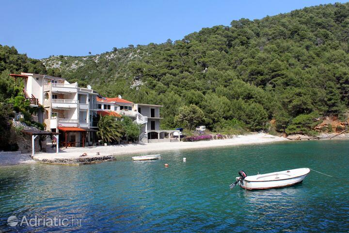 Smokvina pe insula Hvar (Srednja Dalmacija)