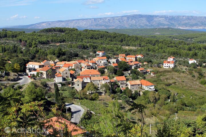 Pitve na wyspie Hvar (Srednja Dalmacija)