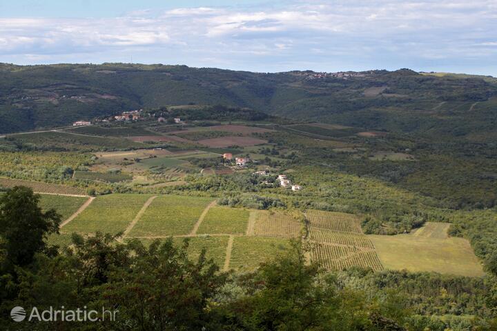 Motovun - Bataji in riviera Središnja Istra (Istra)