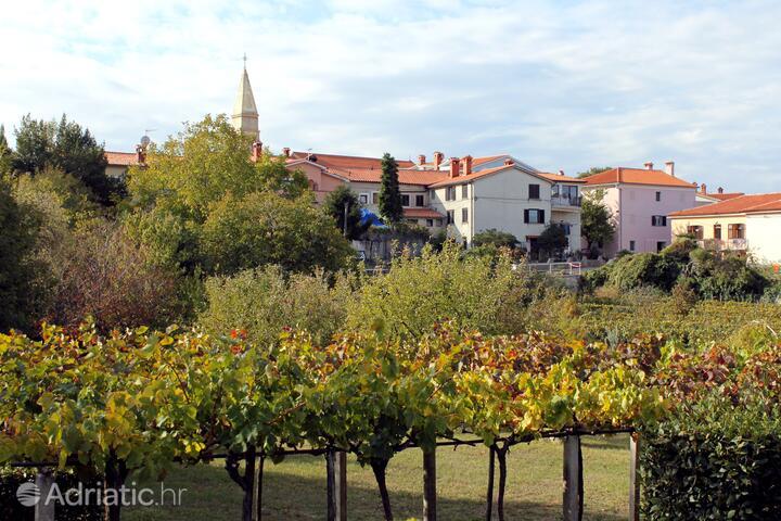 Nedešćina in riviera Središnja Istra (Istra)