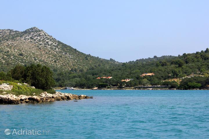 Magrovica - Telašćica on the island Dugi otok (Sjeverna Dalmacija)