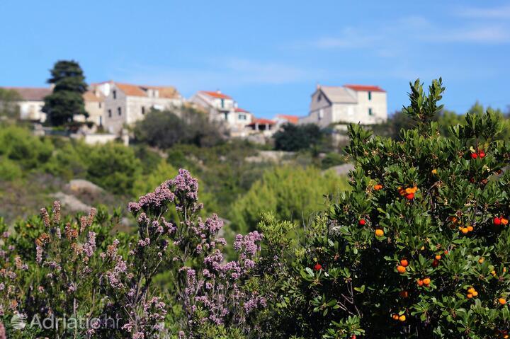 Duboka na wyspie Vis (Srednja Dalmacija)
