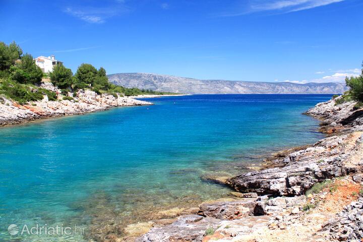 Rosohotnica na otoku Hvar (Srednja Dalmacija)