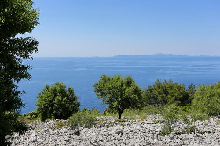 Smrč na otoku Korčula (Južna Dalmacija)