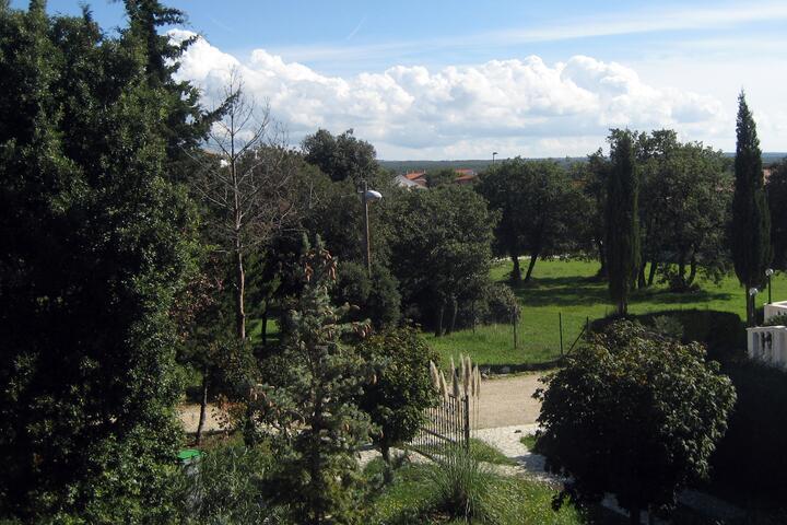Betiga u rivijeri Fažana (Istra)