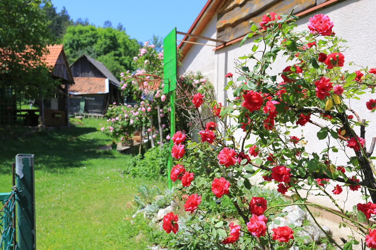 Ferienwohnung im Ort Peruai (Velebit), Kapazität 4+2 (2631071), Perusic, , Kvarner, Kroatien, Bild 17