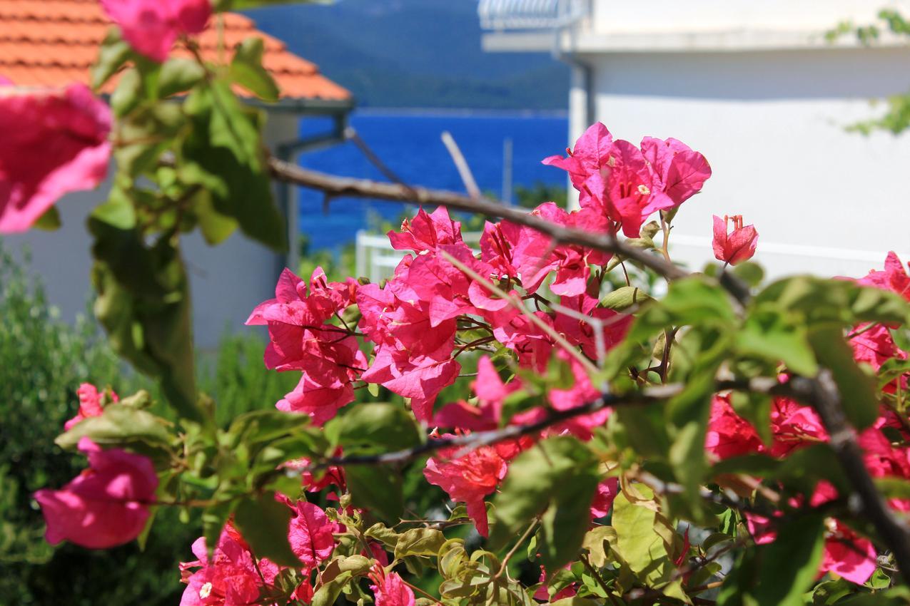 Ferienwohnung im Ort Kuiate - Perna (Peljeaac), Kapazität 4+2 (1011255), Kuciste, Insel Peljesac, Dalmatien, Kroatien, Bild 16