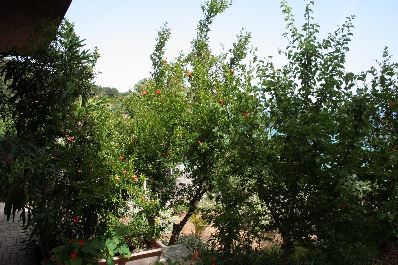 Ferienwohnung im Ort Kuiate - Perna (Peljeaac), Kapazität 4+0 (1013638), Kuciste, Insel Peljesac, Dalmatien, Kroatien, Bild 15