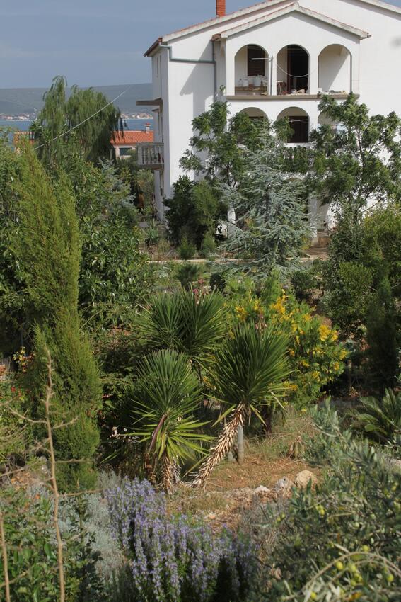 Ferienwohnung im Ort Neviane (Paaman), Kapazität 4+1 (1013429), Nevidane, Insel Pasman, Dalmatien, Kroatien, Bild 24