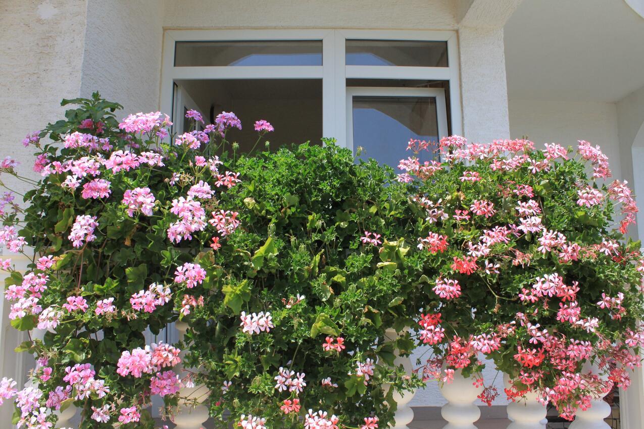 Ferienwohnung im Ort Neviane (Paaman), Kapazität 4+1 (2039207), Nevidane, Insel Pasman, Dalmatien, Kroatien, Bild 26