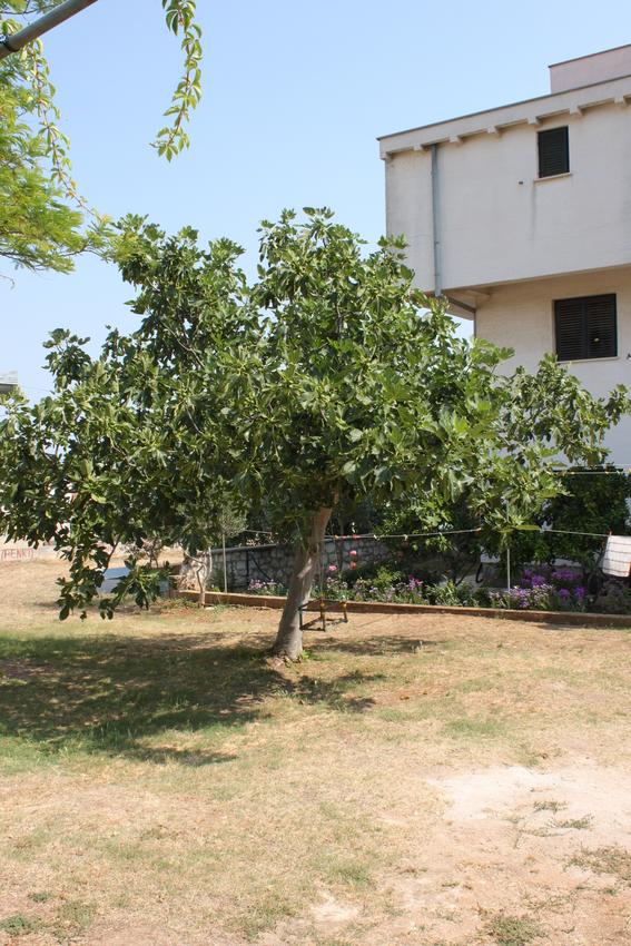 Ferienwohnung im Ort Dobropoljana (Paaman), Kapazität 4+1 (1012349), Nevidane, Insel Pasman, Dalmatien, Kroatien, Bild 29