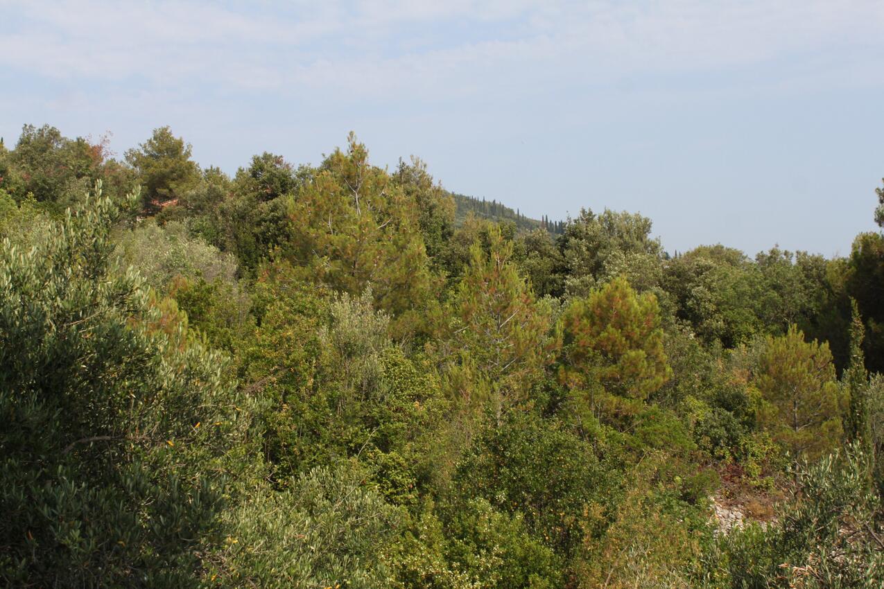 Ferienwohnung im Ort Kali (Ugljan), Kapazität 5+1 (1012437), Kali, Insel Ugljan, Dalmatien, Kroatien, Bild 26