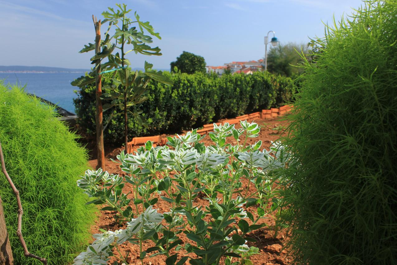 Ferienwohnung im Ort Kali (Ugljan), Kapazität 4+1 (1012461), Kali, Insel Ugljan, Dalmatien, Kroatien, Bild 31