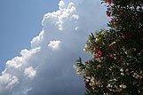 Artistic composition of oleander and clouds