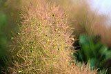 Podroben posnetek rastline
