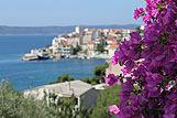 Cvet bugenvilije v mestu Igrane; v ozadju riviera Makarska