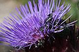 Kukci i cvijet, Hrvatska