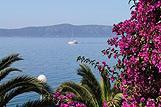 Close-up shot of bougainvillea and distant sailboat, Podgora, Makarska Riviera