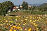 Tekvicové pole, riviéra Vnútrozemie Istrie