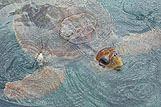 Podroben posnetek želve v vodi
